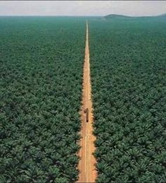 largest date farm in the world