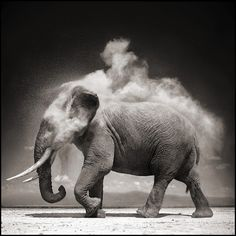 TyHyChi ~ you can.. Teach Yourself To Heal Yourself: Unforgettable Safari themed Photos from Photographer Nick Brandt.. Elephants, Lions, Giraffes.. & more..