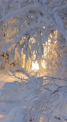 C'est magique,,superbe paysage d'hiver