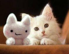 Cute cat and friend