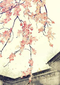 Plum blossoms over ancient roofs by Chinese illustrator  Ibuki Satsuki 伊吹五月