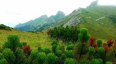 Kopske Sedlo Zdiar #BelianskeTatry #TatraMountains #Slovakia #TatraNationalPark #VysokeTatry High Tatras, 2 Photos, Places To Go, Mountains, Nature, Travel, Naturaleza, Viajes, Traveling