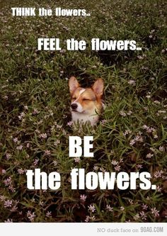 This looks so much like our little Corgi, McCoy who is now in doggie heaven herding to her heart's delight!