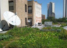 True Nature Foods Rooftop Victory Garden