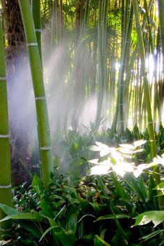 Bambusrohre im Urwald