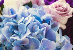 blue pink flowers stock photo