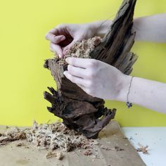 How to Make a Mounted Driftwood Planter