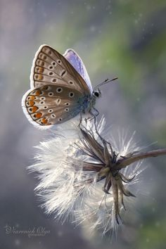 Photograph A blue secret by Olga Viarenich on 500px