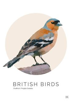 British Birds - Chaffinch Illustration | Pretty Limits - Limited Edition Prints for the Home