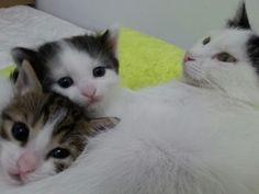 Ροζα η γατουλα μου με τα γατακια της♡