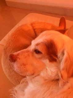 Mac laying his head on Toto. So sweet...
