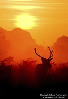 Stag in the Mist by  Joe Kellard on 500px.com