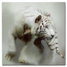 Home Accessories - White Tiger Canvas Print Big Cats, Cats And Kittens, Cute Cats, Cute Baby Animals, Animals And Pets, Funny Animals, Wild Animals, Beautiful Cats, Animals Beautiful