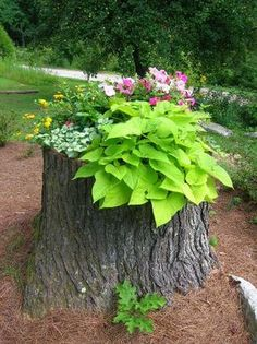 Beautify an old stump with a mini garden...Unexpected and lovely.
