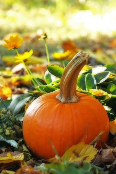 Being a Christian is like being a pumpkin: God picks you from the patch, brings you in,  washes all the dirt off you may have gotten from the other pumpkins. Then He cuts the top off & scoops out all the yucky stuff. He removes the seeds of doubt, hate, greed, etc., then  carves you a new smiling face & puts His light inside you to shine for all the world to see. This msg. was passed on to me from another pumpkin that was picked from the patch.