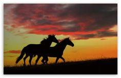 Wild Horses Running HD wallpaper for Standard 4:3 5:4 Fullscreen UXGA XGA SVGA QSXGA SXGA ; Wide 16:10 5:3 Widescreen WHXGA WQXGA WUXGA WXGA...