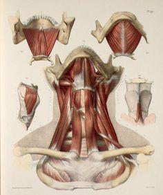 Анатомия – 341 фотография