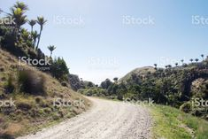 Rural Dirt Road through Nikau Palms royalty-free stock photo New Zealand Landscape, Palms, Nostalgia, Royalty Free Stock Photos, Country Roads, Beach, Water, Photography, Outdoor