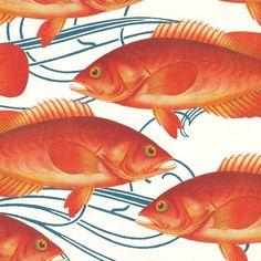 Caskata Artisanal Paper - Pink Fish