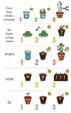 Hydroponic Growing Systems – Info For Your Garden Hydroponic Growing, Hydroponic Gardening, Growing Plants, Hydroponics, Organic Gardening, Eco Garden, Market Garden, Natural Garden, Edible Garden