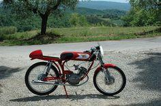 モトモリーニ