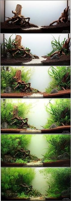 Home Aquarium Ideas - Complete Kits vs Individual Components - What is Better? The Magical World of Aquascaping Terrariums (WITH PICTURES!), page 1 ideas Aquarium Landscape, Nature Aquarium, Home Aquarium, Aquarium Design, Saltwater Tank, Saltwater Aquarium, Freshwater Aquarium, Aquarium Fish, 5 Gallon Aquarium