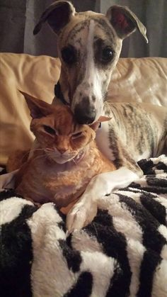 Headrest is not too happy...:o)......... I love animals and watching their relationships . .