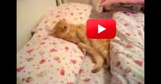 Kitty Is Ready To Go To Sleep | The Animal Rescue Site Blog