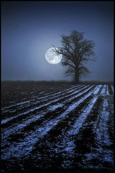 Evening Winter Moon in the Country