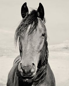 Black and White Horse Portrait Photograph, 8x10 Vertical Animal photography via Etsy