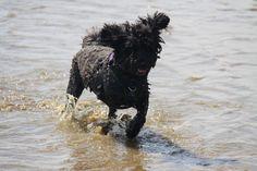 Jojo in the sea - July 2014
