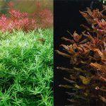 Culturing a More Diverse Planted Aquarium