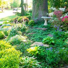 garden ideas near tall trees   ... grass in the deep shade and competitive environment under the tree