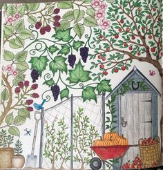 Secret Garden Coloring Book Prismacolor Colored Pencils