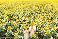 Sunflower field | Photo by Axioo #sunflowers #wedding