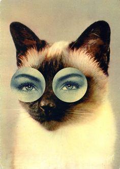 Collages : des yeux humains sur des têtes d'animaux                                                                                                                                                                                 More