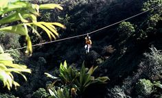 Ziplining in Hawaii!                   Google Image Result for http://www.hawaii-zipline.com/Portals/0/Product/Zipline-in-Hawaii-Ziplining.jpg