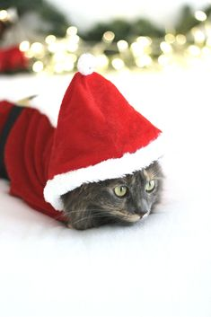 The Most Festive Cats You'll Ever See - A Girl & Grey | Christmas | Cats | Cats in Costume | Belle and Nala