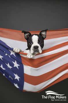 Puppies and Flags! Baby Boston Terrier in his U.S. flag.  Any flag you can dream of, we can make it! www.the-flag-makers.com