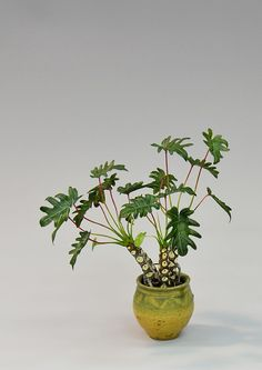 The remarkable and realistic work of Hiroyuki and Kyoko Plant / Works