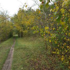 Am Kanal entlang durch das Laub spazieren #Herbst #Lindenau