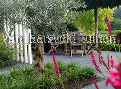 Kleine moderne achtertuin met een olijfboom en exclusieve staanders