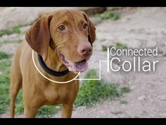 5 Futuristic Gadgets For Dogs - YouTube