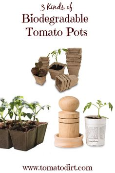 compare: biodegradable seed starting pots to use to start toma Go green! 3 kinds of biodegradable seed starting pots with Tomato DirtGo green! 3 kinds of biodegradable seed starting pots with Tomato Dirt Tomato Seedlings, Tomato Seeds, Tomato Plants, Organic Gardening, Sustainable Gardening, Urban Gardening, Flower Gardening, Growing Tomatoes In Containers, Grow Tomatoes
