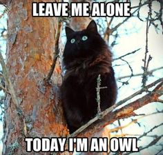 #leave me #alone #today I'm an #owl #letsgetwordy #caturday