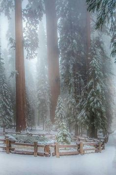 Sequoia Trees California by Ramelli Serge / One of my very favorite places! Winter Szenen, Winter Magic, I Love Winter, Winter Is Coming, Hello Winter, Winter White, Beautiful World, Beautiful Places, Beautiful Pictures