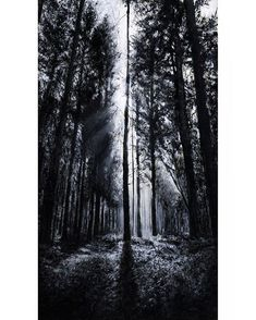 "#tbt In the Woods V | Acrylic on Wood | Artprint available | ""The clearest way into the universe is through a forest wilderness."" John Muir  #art #painting #artprint #gallery #artist #instaart #instaartist #artoftheday #blackandwhite #bnw #monoart #monochrome #bnw_society #bw_lover #monochromatic #noir #nature #tree #forest #woods #sunrise #silhouette #brightsun #artsindemand #artscrowds #artsbeautifulx #instaartexplorer #Arrtposts #artistic_unity_"