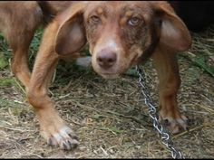 An Emotional And Inspiring Dog Rescue Story - Homeless Dog Transformation