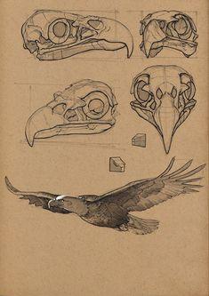 To Draw People - The Female Body Resultado de imagem para bird anatomy drawingResultado de imagem para bird anatomy drawing Illustration Tattoo, Illustration Sketches, Drawing Sketches, Drawing Ideas, Anatomy Drawing, Anatomy Art, Animal Anatomy, Bird Drawings, Animal Drawings