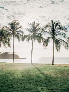 that palm tree life tho